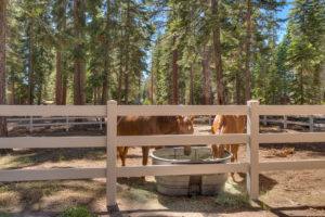 COMING SOON – SADDLE UP AND EXPLORE IN YOUR OWN BACKYARD IN CARNELIAN BAY